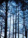 Silhueta das árvores Imagens de Stock Royalty Free