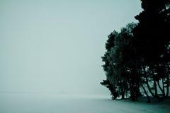 Silhueta das árvores do inverno em Alemanha Fotografia de Stock Royalty Free