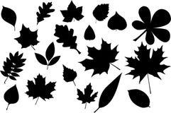 Silhueta das folhas Fotografia de Stock Royalty Free