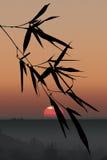 Silhueta das folhas de bambu Fotografia de Stock