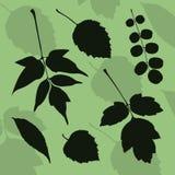 Silhueta das folhas de espécies diferentes de árvores Imagem de Stock Royalty Free