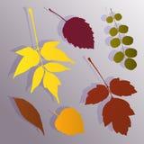 Silhueta das folhas de outono Imagem de Stock Royalty Free