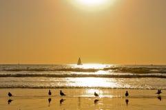 Silhueta das gaivotas na praia Imagem de Stock Royalty Free