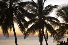 Silhueta das palmas Imagem de Stock