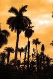 Silhueta das palmeiras fotos de stock royalty free