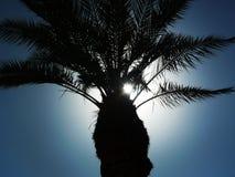 Silhueta das palmeiras Imagem de Stock Royalty Free
