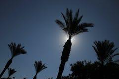 Silhueta das palmeiras contra o céu azul claro fotos de stock royalty free