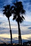 Silhueta das palmeiras do por do sol de Califórnia foto de stock