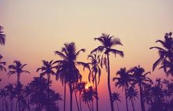 Silhueta das palmeiras no por do sol, filtro do vintage fotografia de stock