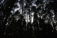 silhueta de árvores escuras foto de stock royalty free