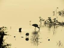 A silhueta de alguns pássaros capturou na Índia ocidental fotografia de stock
