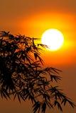 Silhueta de bambu Fotos de Stock Royalty Free