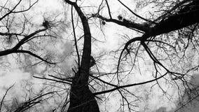 Silhueta de corvos do voo vídeos de arquivo