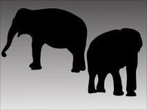 Silhueta de dois elefantes Fotos de Stock