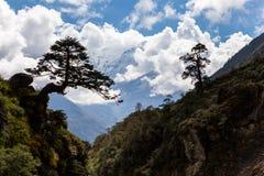 Silhueta de duas árvores acima do rio do desfiladeiro da garganta da montanha Imagem de Stock Royalty Free