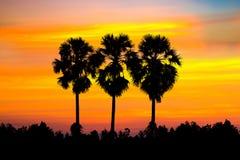 A silhueta de palmeiras do açúcar com arroz arquivou no whit Fotos de Stock