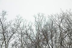 Silhueta de partes superiores da árvore na fileira imagens de stock royalty free