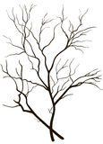 Silhueta de ramos de árvore Imagens de Stock Royalty Free