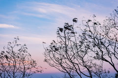 Silhueta de ramos de árvore com céu agradável Foto de Stock