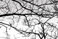 Silhueta de ramos secos de uma árvore Imagens de Stock Royalty Free