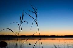 Silhueta de Reed e de aranha Nascer do sol e lago finlandês no backgrou Foto de Stock Royalty Free