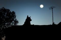 Silhueta de um cão fotografia de stock