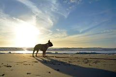 Silhueta de um cão do buldogue francês contra o por do sol bonito na praia da areia em férias fotografia de stock royalty free