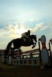 Silhueta de um cavalo Imagens de Stock Royalty Free