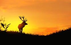 Silhueta de um cervo Fotos de Stock Royalty Free