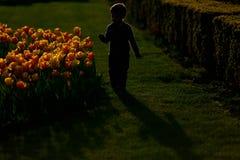 Silhueta de um corredor do menino, flores amarelas Fotografia de Stock