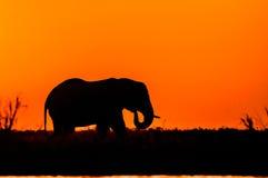 Silhueta de um elefante Imagem de Stock Royalty Free