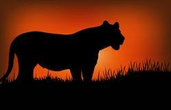 Silhueta de um leopardo Fotografia de Stock