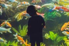 Silhueta de um menino que olha peixes no aquário fotos de stock royalty free