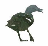 A silhueta de um pato do pato selvagem encheu-se com a superfície rippled da água Fotografia de Stock Royalty Free