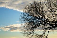 Silhueta de um ramo de árvore contra o céu no por do sol foto de stock royalty free