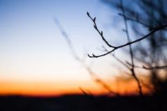 Silhueta de um ramo contra o céu com um alvorecer imagens de stock royalty free