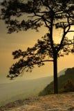 Silhueta de um ramo de árvore Fotos de Stock Royalty Free