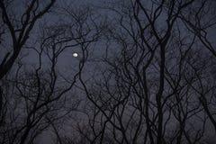 A silhueta de um treeline leafless Imagem de Stock
