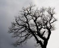 Silhueta de uma árvore. Fotografia de Stock