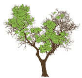 Silhueta de uma árvore Foto de Stock Royalty Free