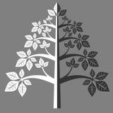 Silhueta de uma árvore 7 Imagem de Stock Royalty Free