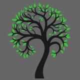 Silhueta de uma árvore 6 Imagem de Stock Royalty Free