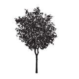 Silhueta de uma árvore alaranjada Fotografia de Stock
