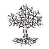 Silhueta de uma árvore com folhas, em um fundo branco ilustração do vetor