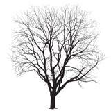 Silhueta de uma árvore grande no inverno Fotografia de Stock Royalty Free
