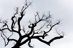 Silhueta de uma árvore inoperante Imagens de Stock