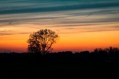 Silhueta de uma árvore solitária contra o céu crepuscular foto de stock