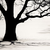 Silhueta de uma árvore velha no inverno Imagem de Stock