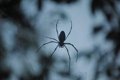Silhueta de uma aranha Foto de Stock Royalty Free