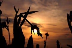 Silhueta de uma flor em um fundo do por do sol Imagens de Stock